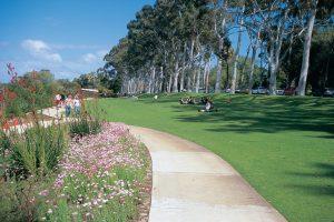 Kings Park Botanical Gardens. Photo Credit: Tourism Western Australia