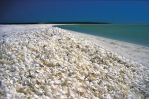 Shell Beach, Denham Photo Credit: Tourism Western Australia
