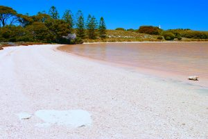 Pink Lake, Rottnest Island. Photo Credit: Rottnest Island Authority