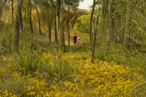 Wildflowers, Hyden. Photo Credit: Tourism Western Australia