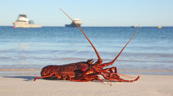 Lobster by the beach, Cervantes, beach, lobster, boats, fishing