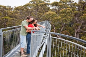 Tree Top Walk, Valley of the Giants. Photo Credit: Tourism Western Australia