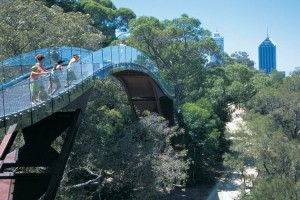 Tree Top Walk, Kings Park. Photo Credit: Tourism Western Australia
