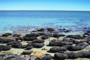 Hamelin Pool Stromatolites, Shark Bay. Photo Credit: Australia's Coral Coast