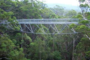 Tree Top Walk, Valley of The Giants, bridge, walk way, trees, canopy, forest